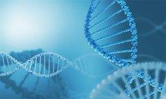 功能区胶质瘤患者:IDH‐突变状态与功能连接的相
